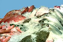 Glace paillettes glace pil e poissonniers for Paillette poisson